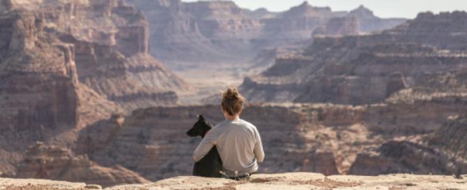 Día internacional del perro - blog petfriendly